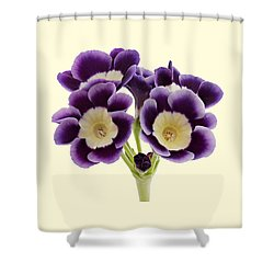 Blue Auricula On A Cream Background Shower Curtain