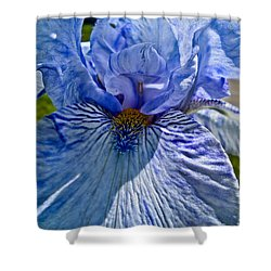 Shower Curtain featuring the photograph Blue Bearded Iris by Joann Copeland-Paul
