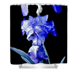 Blue Bearded Rhizomatous Irises Shower Curtain by Danielle  Parent