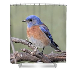 Shower Curtain featuring the photograph Blue Bird At Sedona by Debbie Hart