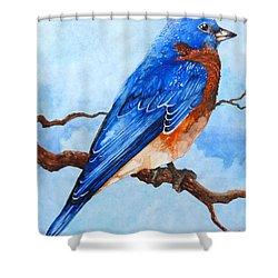 Blue Bird Shower Curtain by Curtiss Shaffer