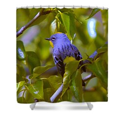 Blue Bird With A Yellow Throat Shower Curtain by Jeff Swan