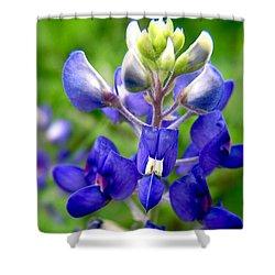 Blue Bonnet Shower Curtain by Adam Johnson