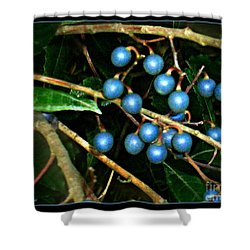 Shower Curtain featuring the photograph Blue Bush Berries  by Leanne Seymour