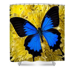 Blue Butterfly On Poms Shower Curtain by Garry Gay