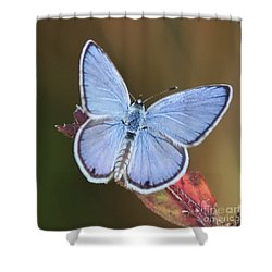 Blue Butterfly Square Shower Curtain by Carol Groenen