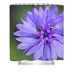 Blue Button Shower Curtain by Ruth Kamenev