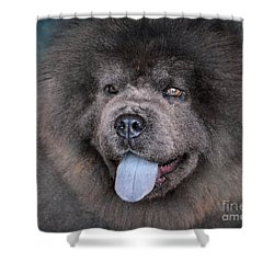 Blue Chow Chow Shower Curtain