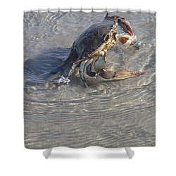 Blue Crab Chillin Shower Curtain by Robert Nickologianis