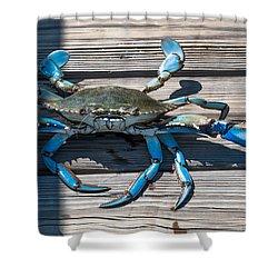 Blue Crab Pincher Shower Curtain