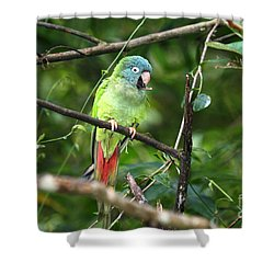 Blue Crowned Parakeet Shower Curtain