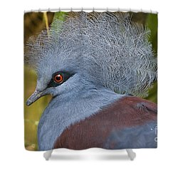 Shower Curtain featuring the photograph Blue-crowned Pigeon by David Millenheft