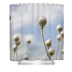 Blue Cupidone Shower Curtain by Lana Enderle