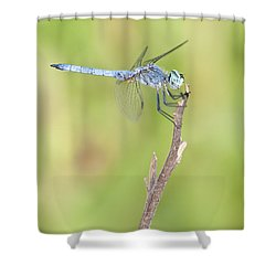 Shower Curtain featuring the photograph Blue Dasher by Bryan Keil