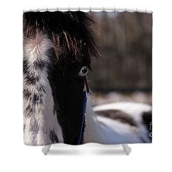 Blue Eye Stare Shower Curtain