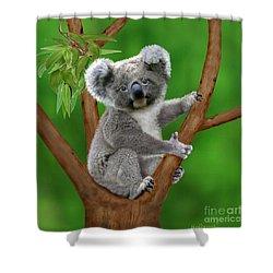 Blue-eyed Baby Koala Shower Curtain