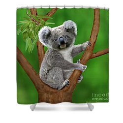 Blue-eyed Baby Koala Shower Curtain by Glenn Holbrook