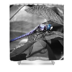 Blue Eyed Dragonfly Shower Curtain