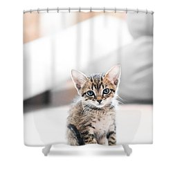 Blue Eyed Kitten Shower Curtain by Shelby  Young