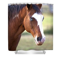 Shower Curtain featuring the photograph Blue Eyes by Gordon Elwell