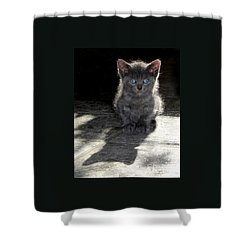 Shower Curtain featuring the photograph Blue Eyes by PJ Boylan