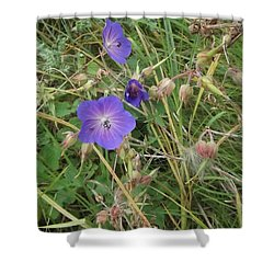 Blue Flowers Shower Curtain by John Williams