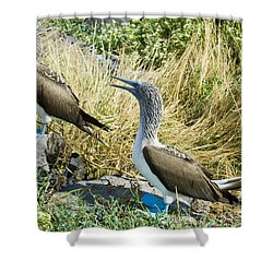 Blue-footed Boobies Shower Curtain by William H. Mullins