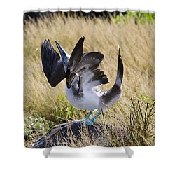 Blue-footed Courtship Behavior Shower Curtain by William H. Mullins