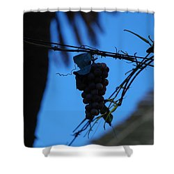 Blue Grapes Shower Curtain by Dany Lison