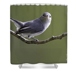 Blue-gray Gnatcatcher Shower Curtain
