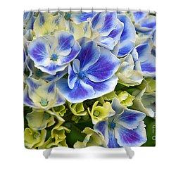 Shower Curtain featuring the photograph Blue Harlequin Hydrandea Flower by Valerie Garner