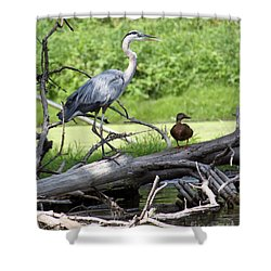 Shower Curtain featuring the photograph Blue Heron And Friend by Debbie Hart