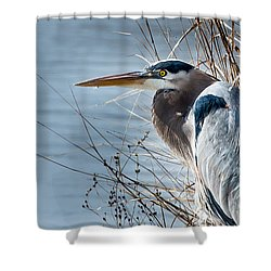 Blue Heron At Pond Shower Curtain