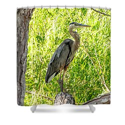 Blue Heron At Rest Shower Curtain