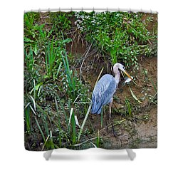Shower Curtain featuring the photograph Blue Heron by Brian Williamson