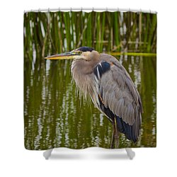 Blue Heron Shower Curtain by Duncan Selby