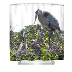 Shower Curtain featuring the photograph Blue Heron Family by Ron Davidson
