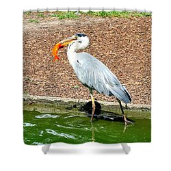 Shower Curtain featuring the photograph Blue Heron Feeding by Joe  Ng