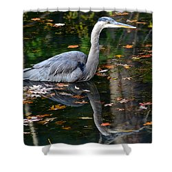 Blue Heron In Autumn Waters Shower Curtain by Frozen in Time Fine Art Photography