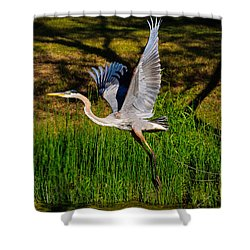 Blue Heron In Flight Shower Curtain