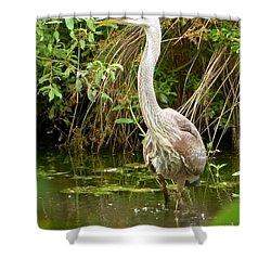 Blue Heron Reflection Shower Curtain by Susan Garren