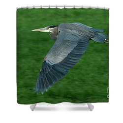Shower Curtain featuring the photograph Blue Heron by Rod Wiens