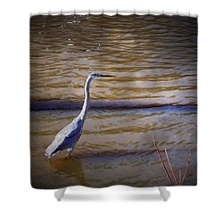 Blue Heron - Shallow Water Shower Curtain by Brian Wallace