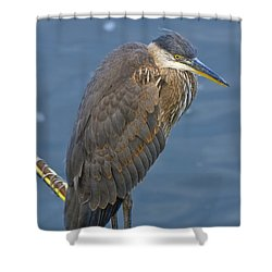 Blue Herron Shower Curtain by Jim Thompson