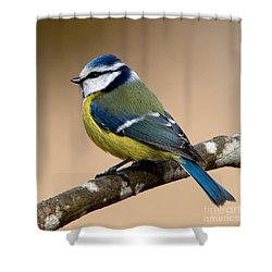 Blue Hood  Shower Curtain by Torbjorn Swenelius