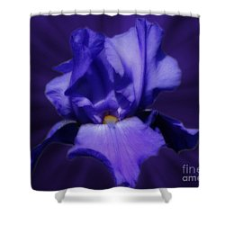 Blue Iris Shower Curtain by Smilin Eyes  Treasures