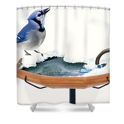 Blue Jay At Heated Birdbath Shower Curtain