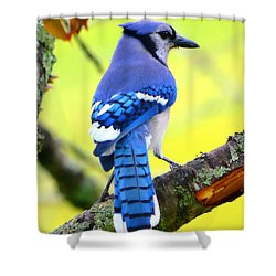 Shower Curtain featuring the photograph Blue Jay by Deena Stoddard