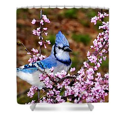 Blue Jay In The Pink Shower Curtain
