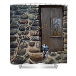 Blue Jay Shower Curtain by Rob Corsetti